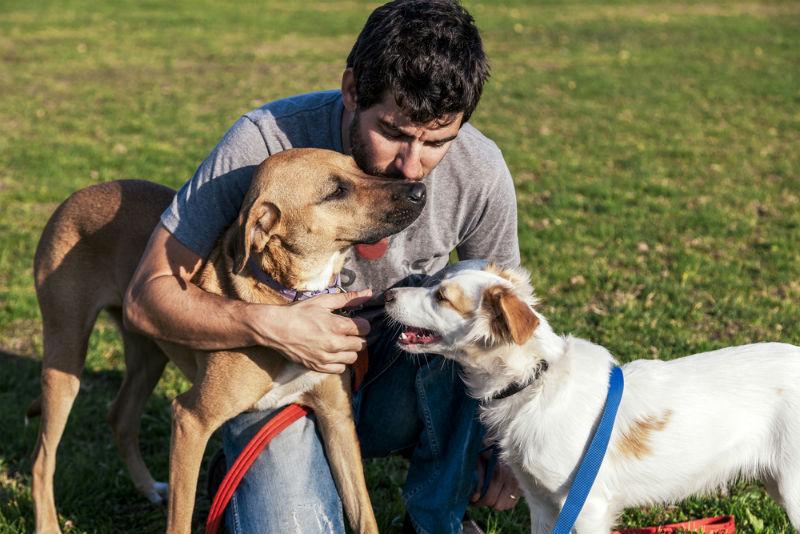 גינת כלבים (אילוסטרציה: שאטרסטוק)