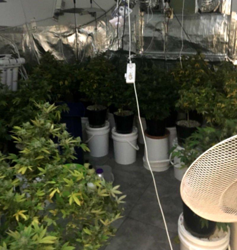 מעבדה לגידול מריחואנה בבת ים (משטרת ישראל)