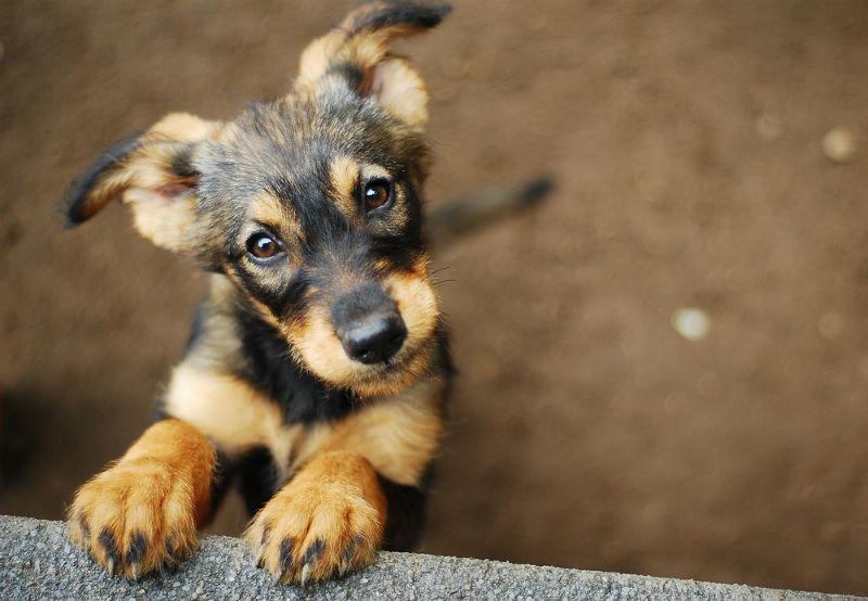 כלב כלבים