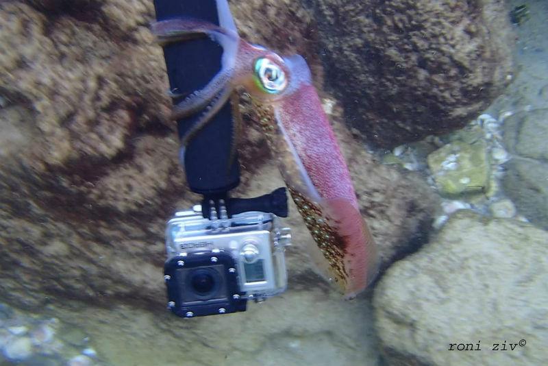 כשיורדים מתחת למים עם מצלמה, מגלים עולם אחר
