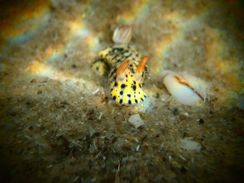 העולם התת ימי של חוף הסלע (צילום: רוני זיו)