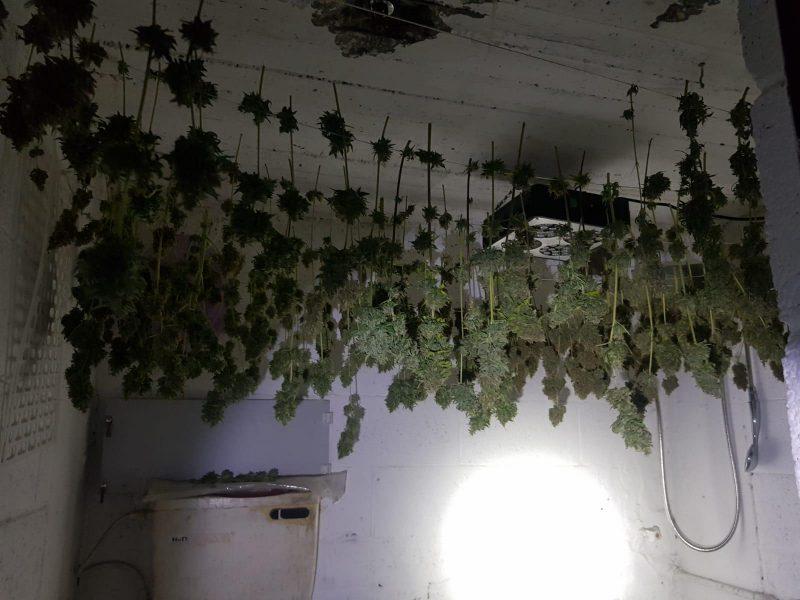 מעבדה לגידול וייצור סמים. צילום: דוברות המשטרה