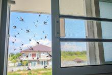 רשתות יתושים לבית. צילום ממאגר shutterstcok, צילום: Kwangmoozaa