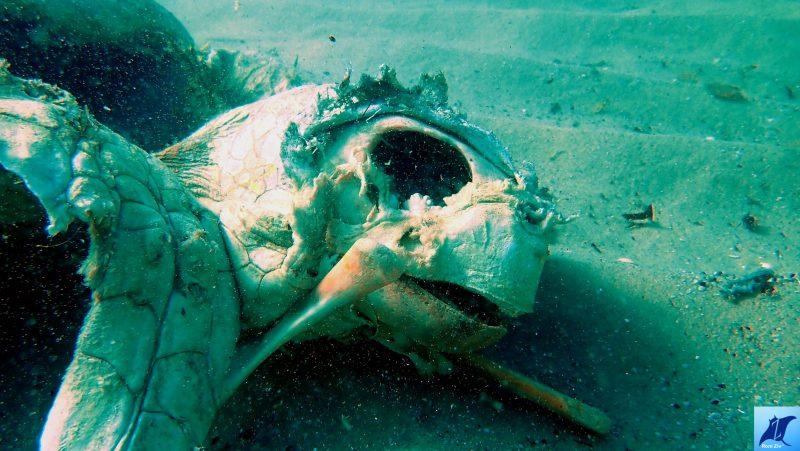 תיעוד גופת צב ים בחוף הסלע